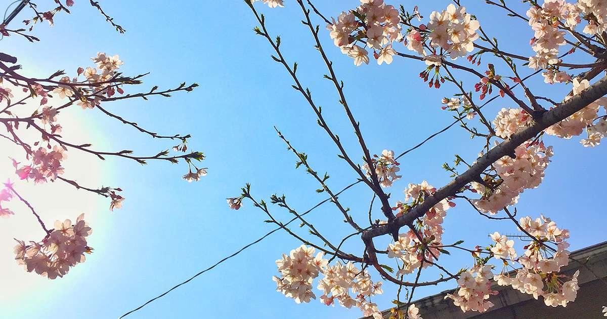 hatsunejaya47_01